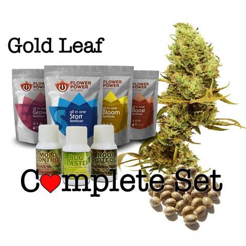gold leaf marijuana , marijuana seeds online , gold leaf seeds online